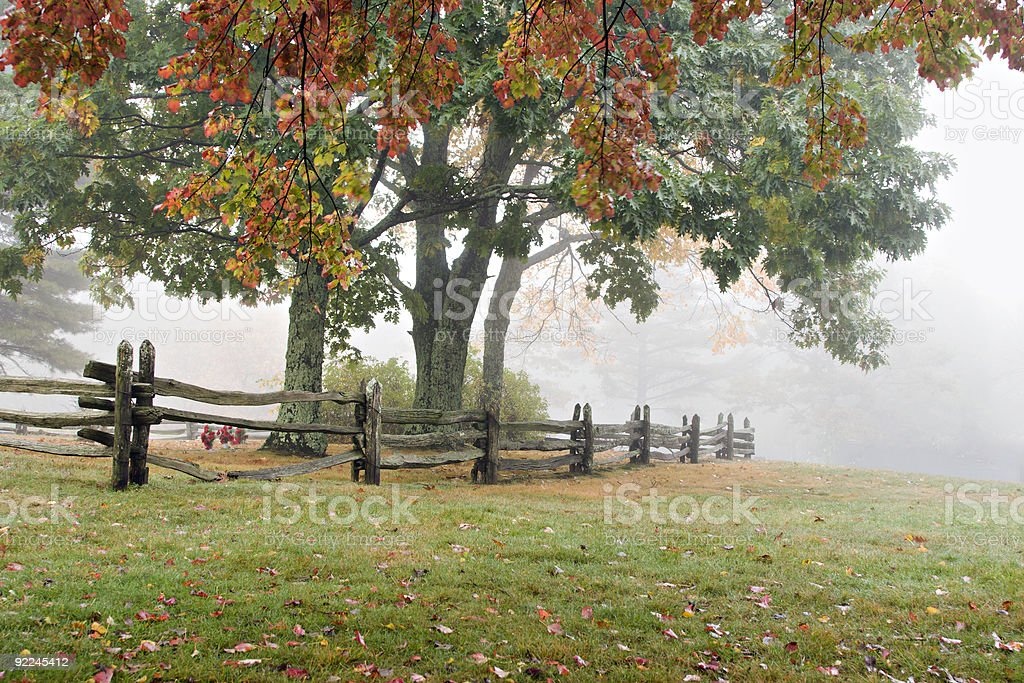 Autumn Trees in Fog royalty-free stock photo