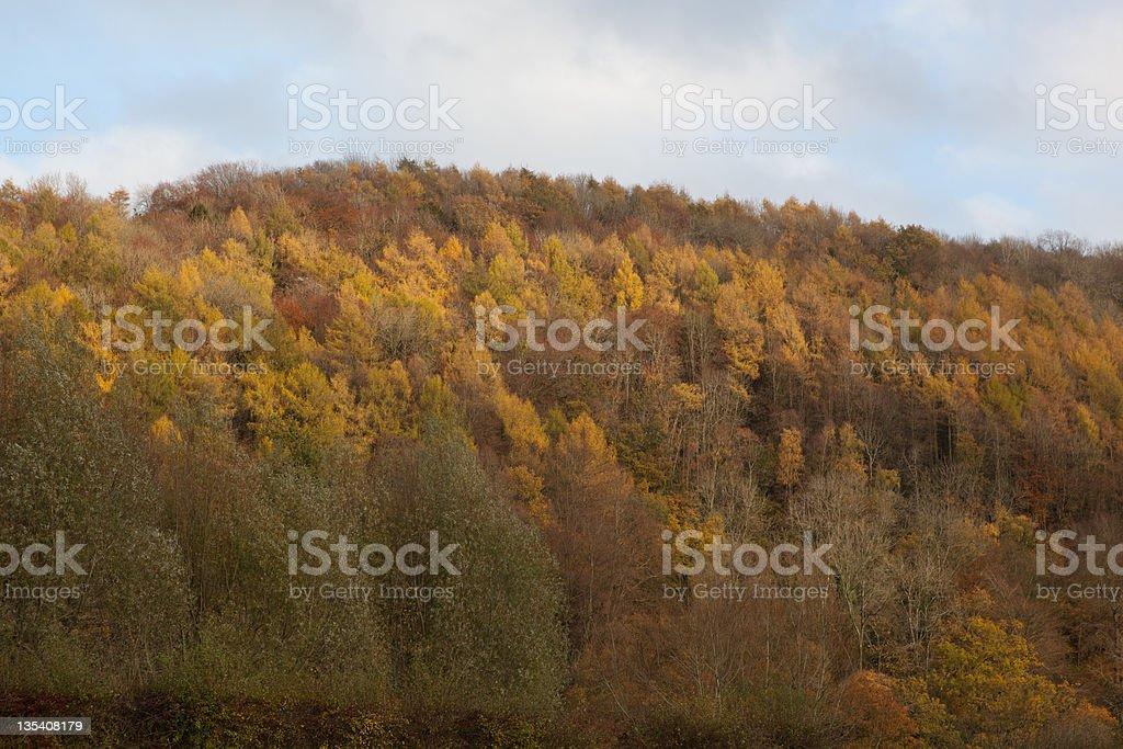 秋の木の照明 ロイヤリティフリーストックフォト