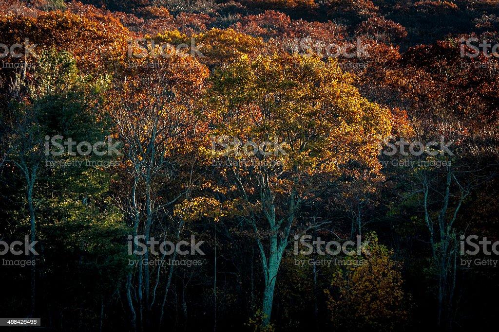Autumn Trees in Morning Light stock photo