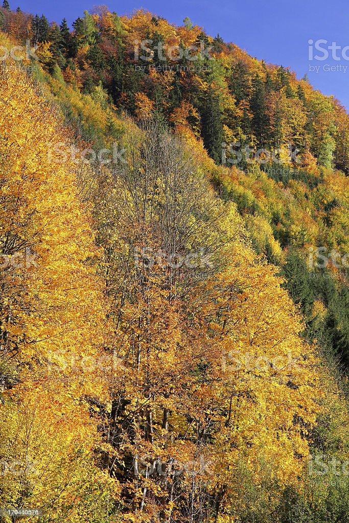 Autumn trees in region Liptov, Slovakia royalty-free stock photo