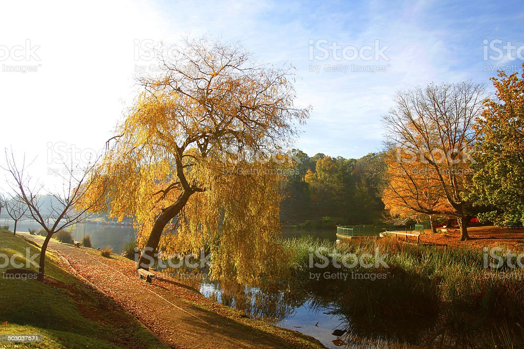 Autumn Trees in the Dandenongs, Victoria, Australia royalty-free stock photo