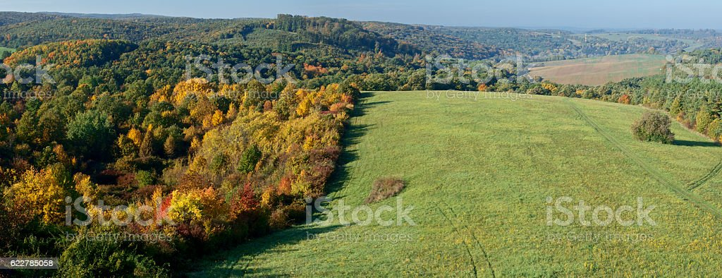 Autumn trees in the forest hill stock photo