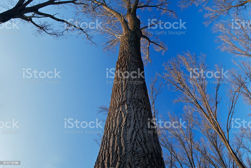 Autumn trees in the river forest stock photo