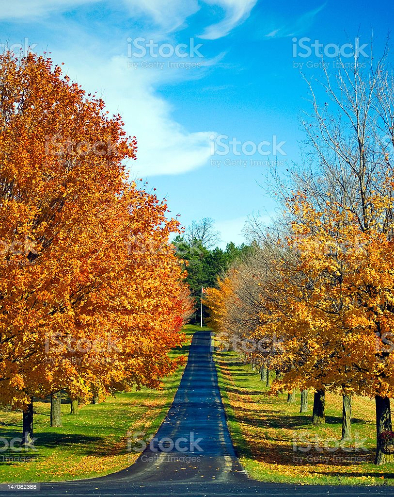 Autumn Trees line a Road royalty-free stock photo