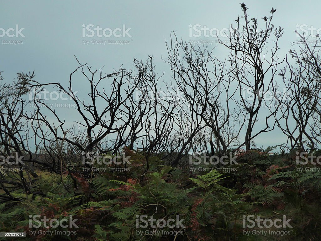 Autumn Trees, New Forest, Lyndhurst, England stock photo