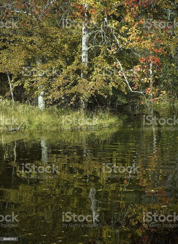 Autumn Trees Reflection on a Pond royalty-free stock photo