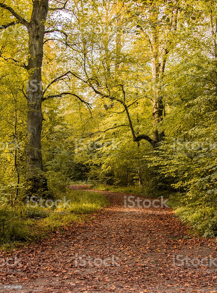 Autumn trees with fallen leaves stock photo