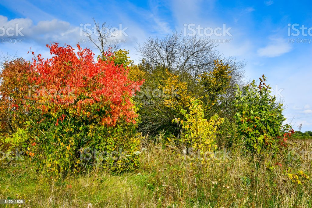 Autumn trees with red leaves and blue sky stock photo