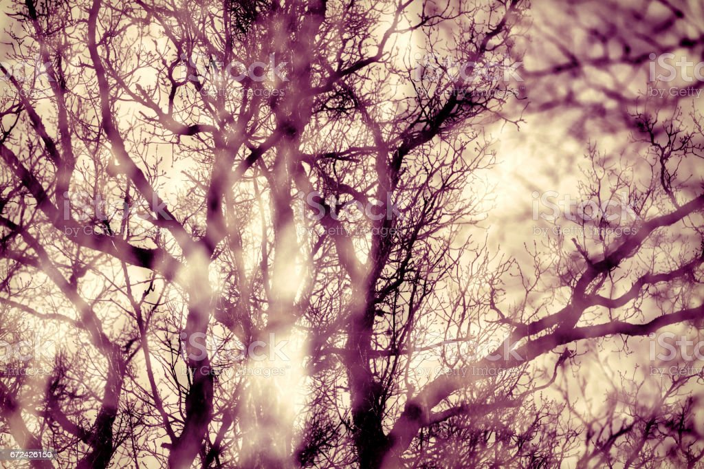 Autumn trees without leaves in double exposure stock photo