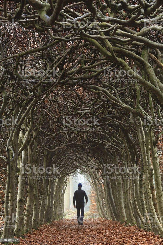 Autumn tunnel stock photo