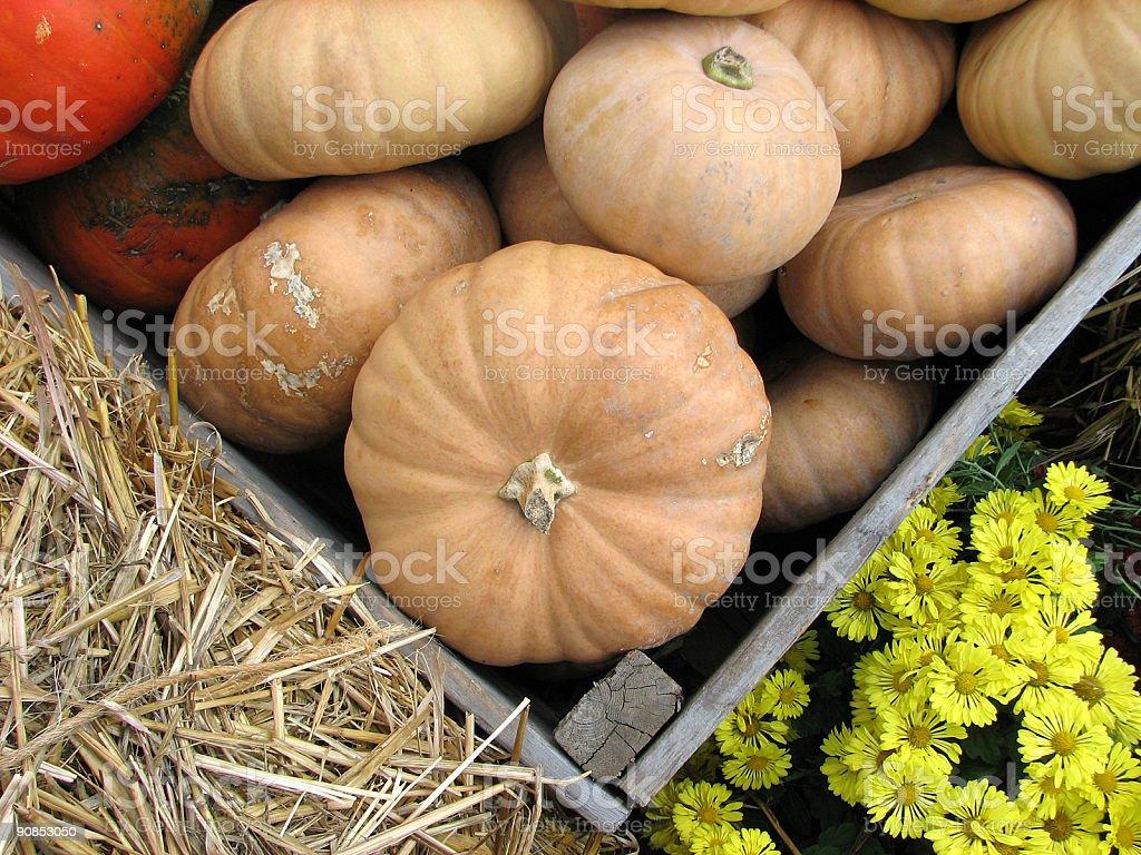 Autumn vegetable market: pumpkins and yellow chrysanthemums stock photo