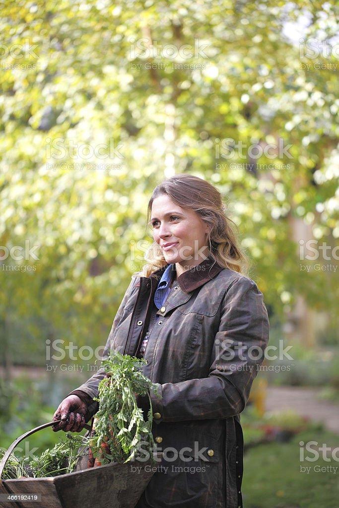 autumn vegtables royalty-free stock photo