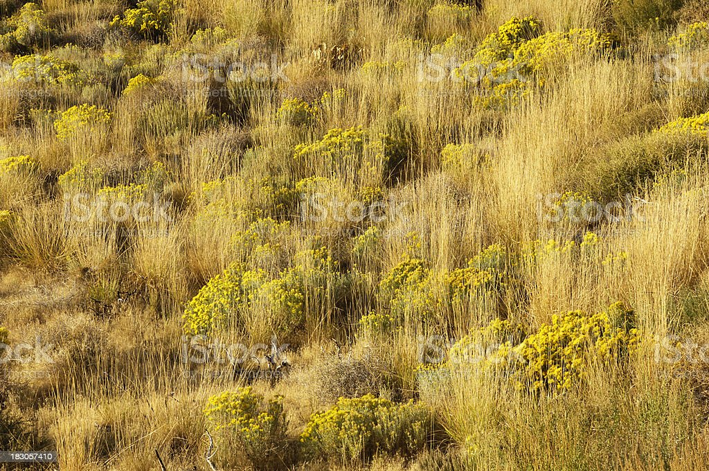 Autumn View of Rabbitbrush and Grasses on the Great Basin royalty-free stock photo