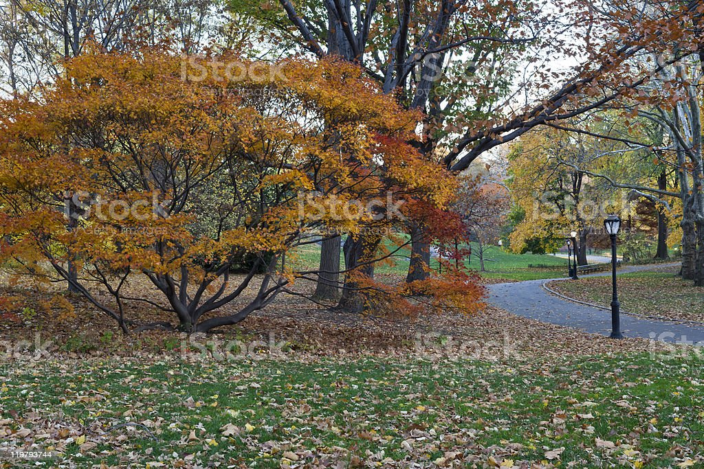 Autumn view of the park stock photo