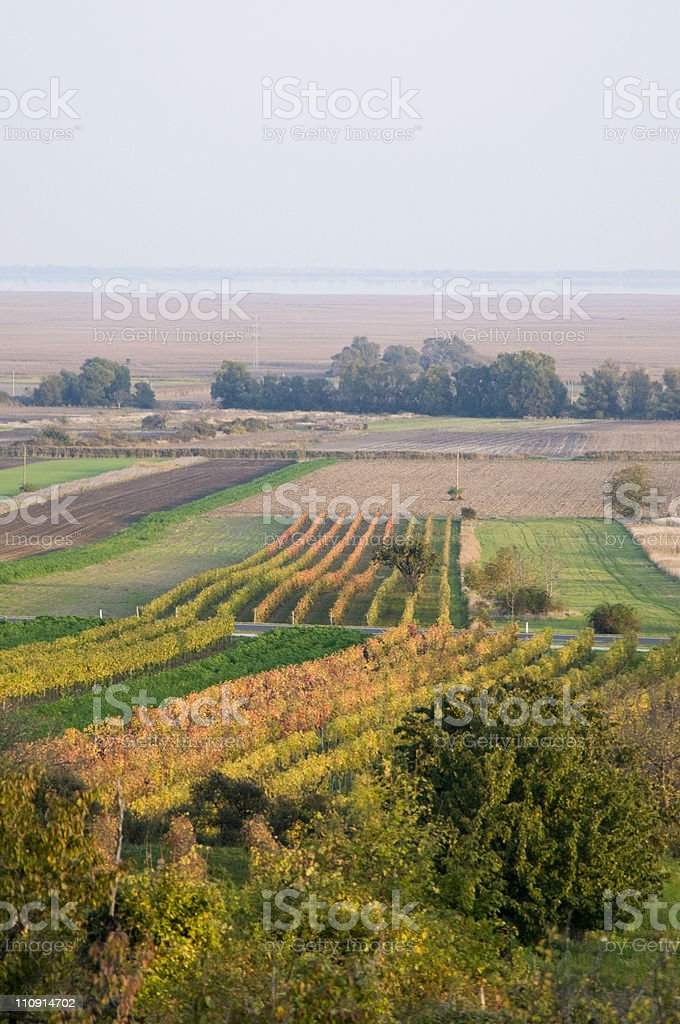Autumn Vineyard in Austria royalty-free stock photo