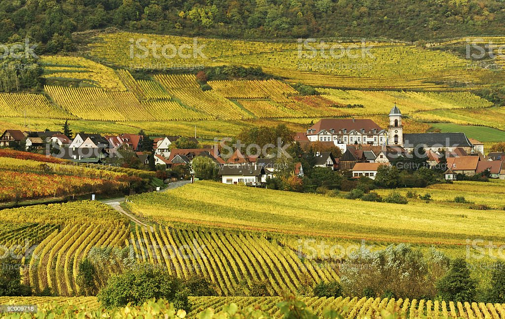 Autumn Vineyard in France stock photo