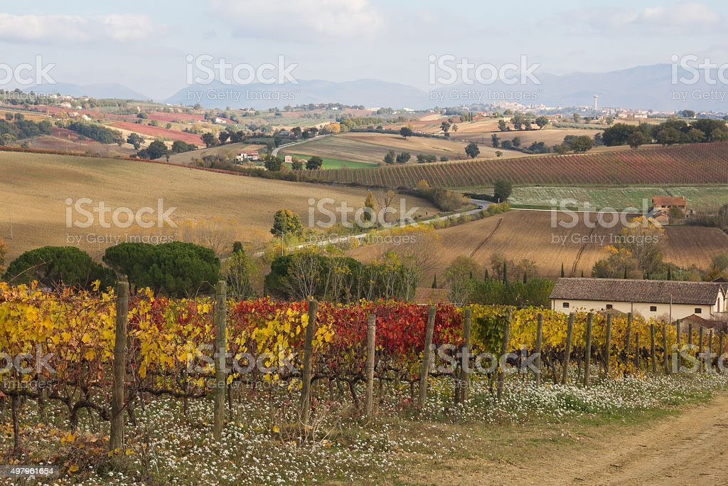 Autumn vineyard near Montefalco, Umbria - Italy. stock photo