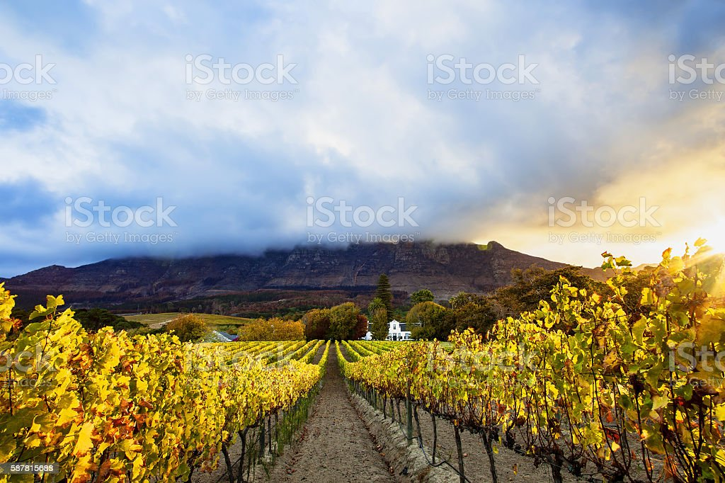 Autumn Vineyards, Cape Town, South Africa stock photo