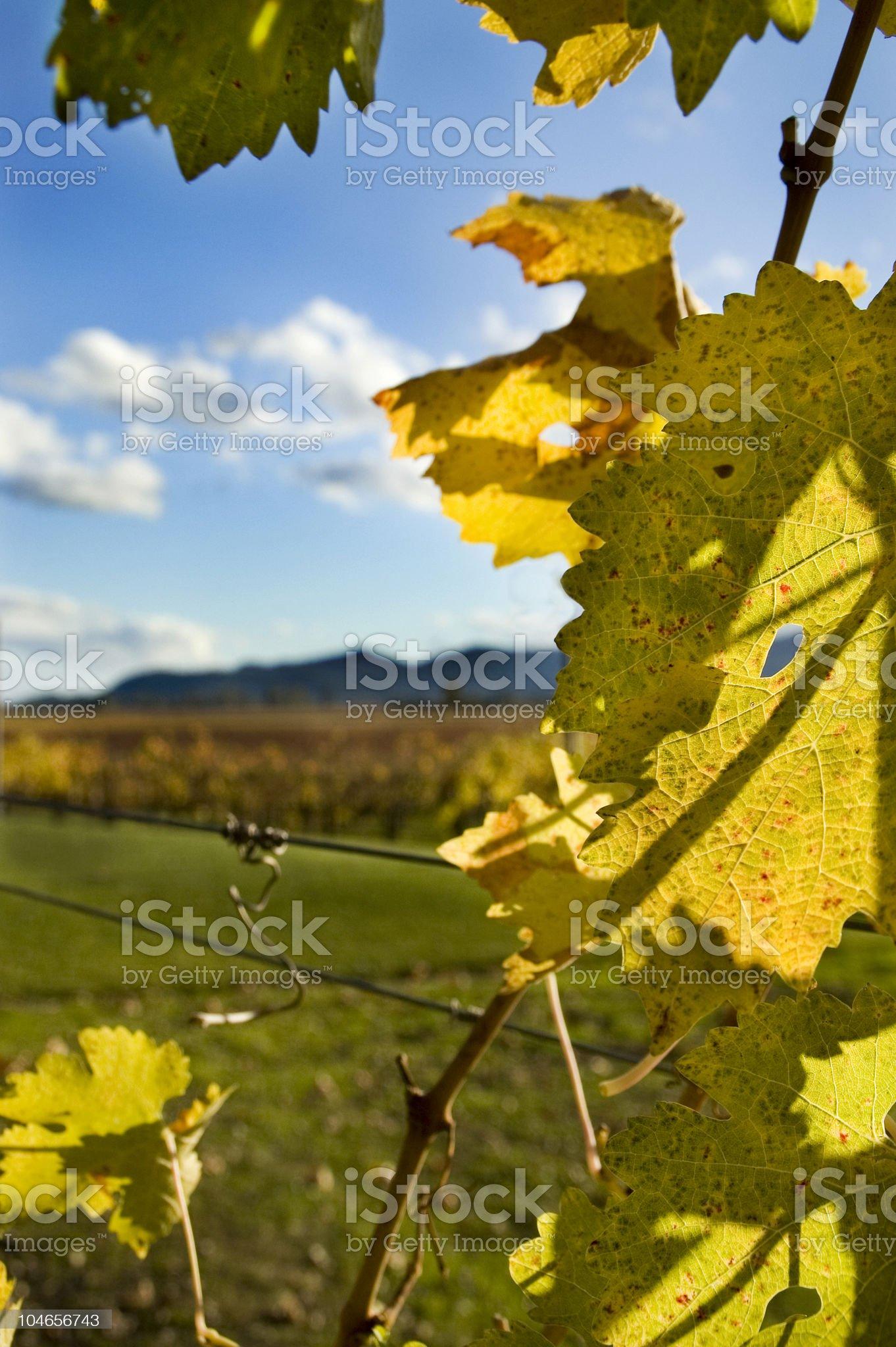 autumn vinyard view royalty-free stock photo