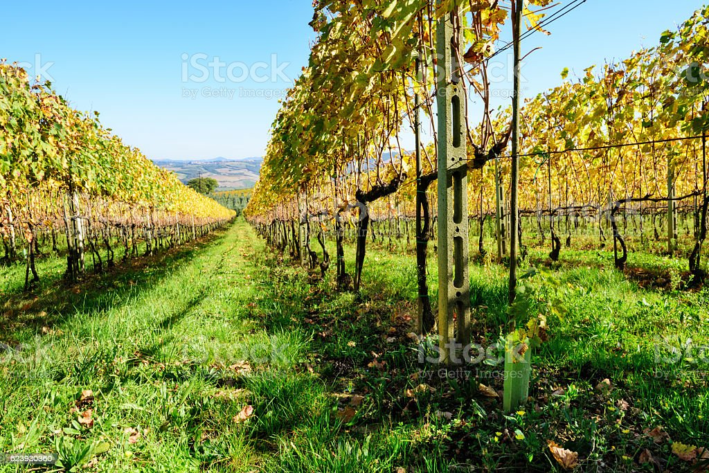 Autumn Vinyards at Montalcino, Tuscany stock photo