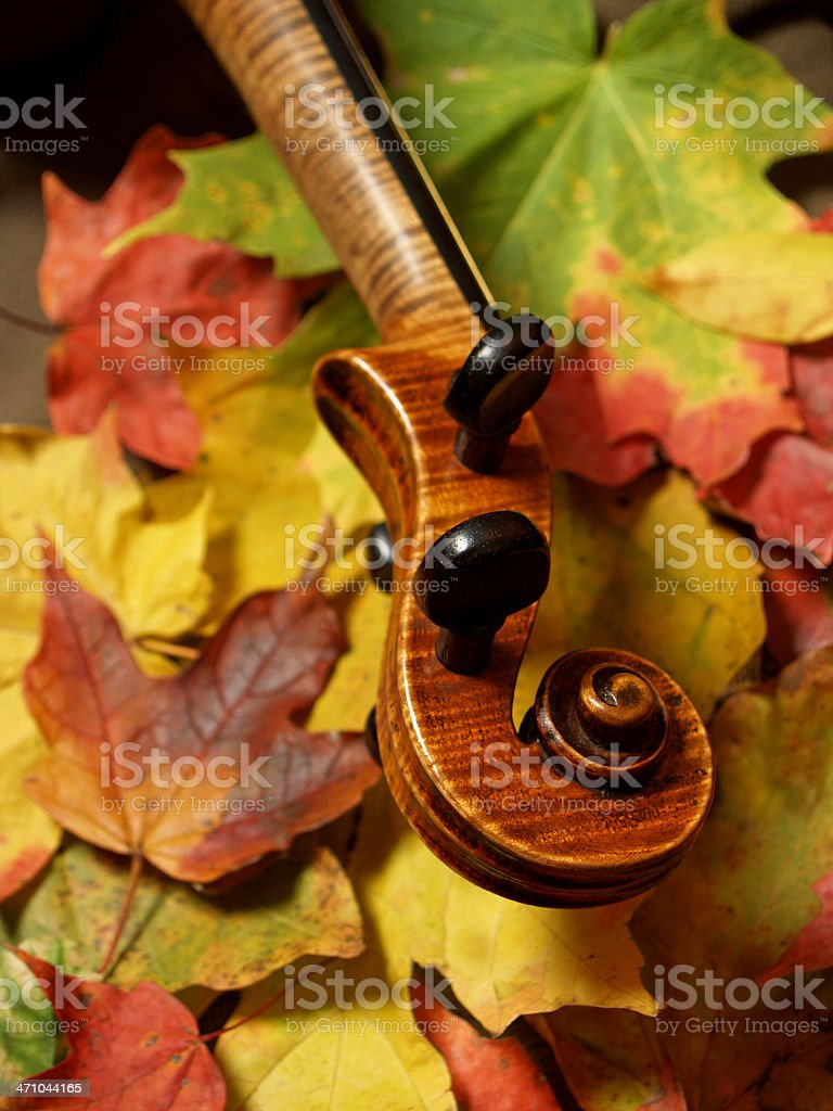 Autumn Violin Scroll and Neck on Colorful Leaves, Vertical royalty-free stock photo