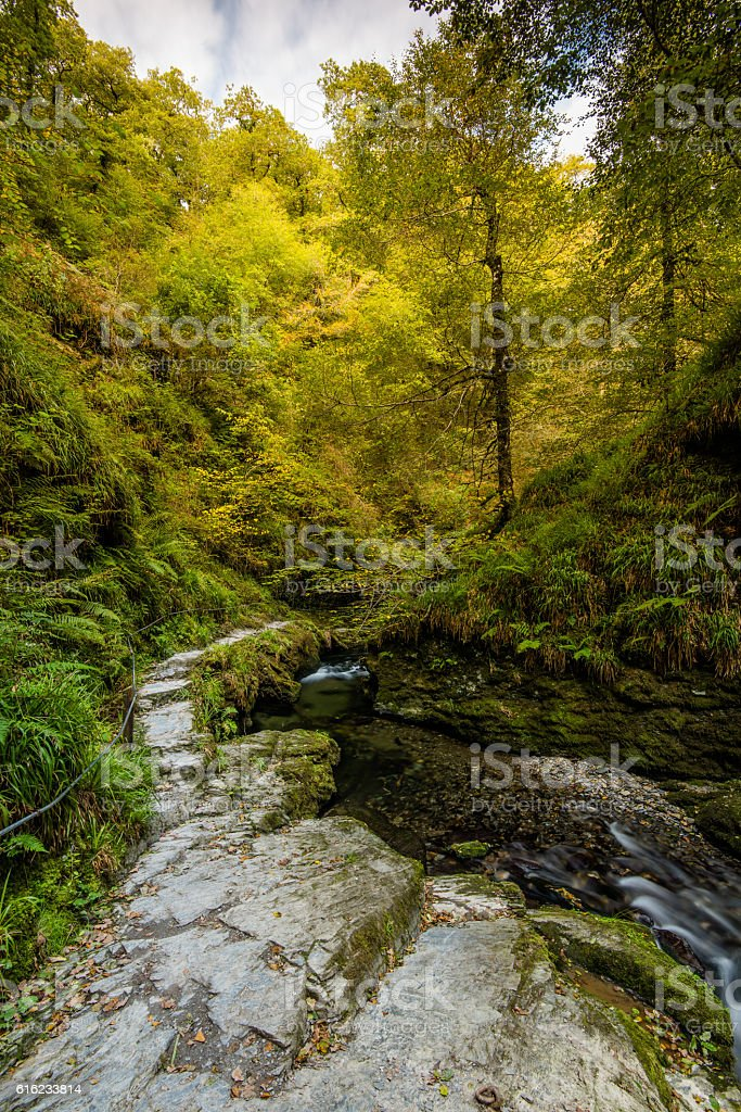 Autumn walk in forest over wild river stock photo