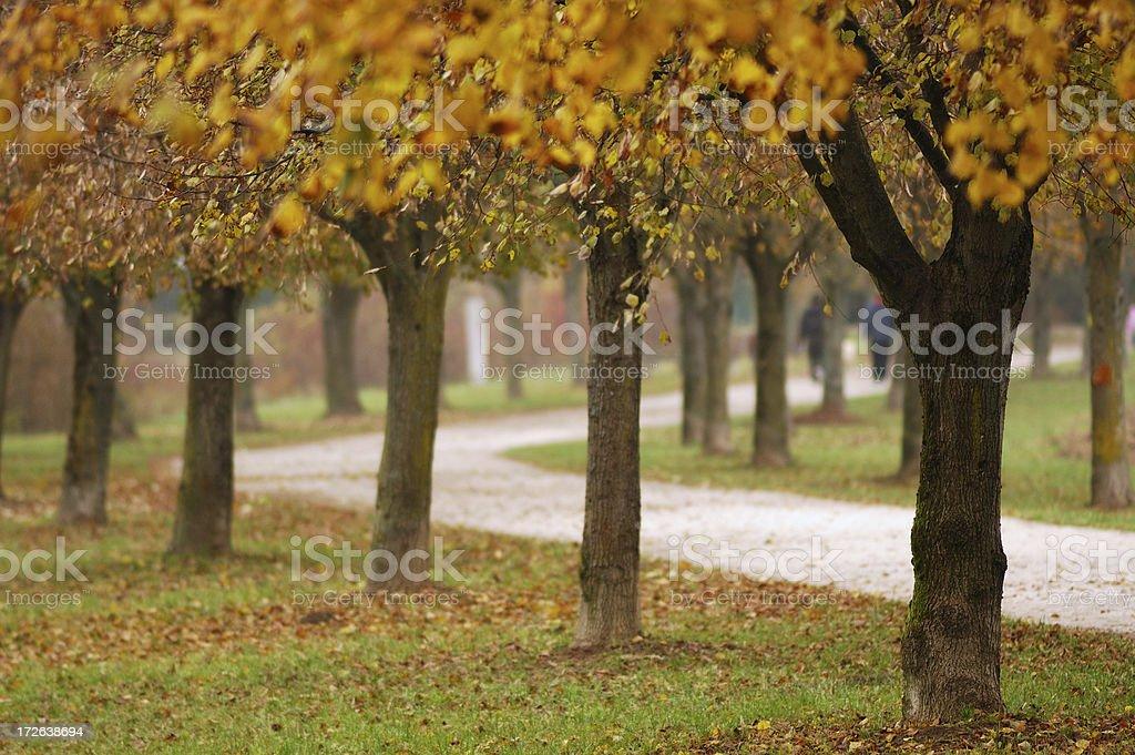 Autumn Walk in Nature stock photo