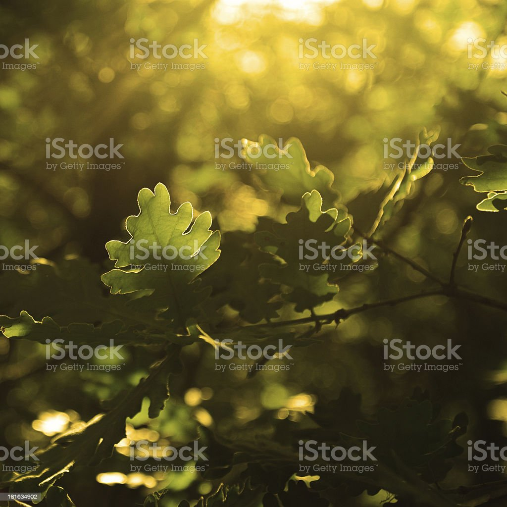 Autumn warmth stock photo