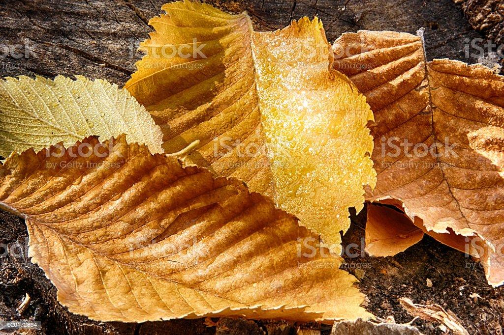 Autumn wet leaf backgrounds stock photo