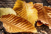 Autumn wet leaf backgrounds