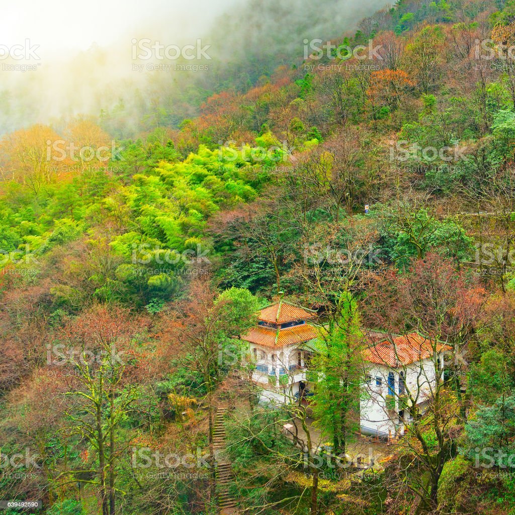 Autumn wet mountain forest in Huangshan National park. stock photo