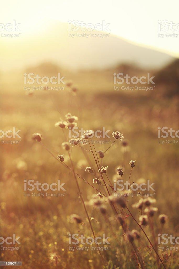 Autumn wild flowers macro royalty-free stock photo