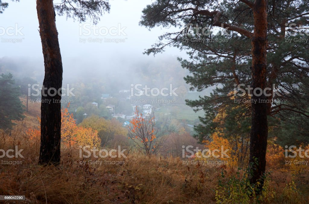 Autumn wild nature. Trees in yellow leaves. stock photo