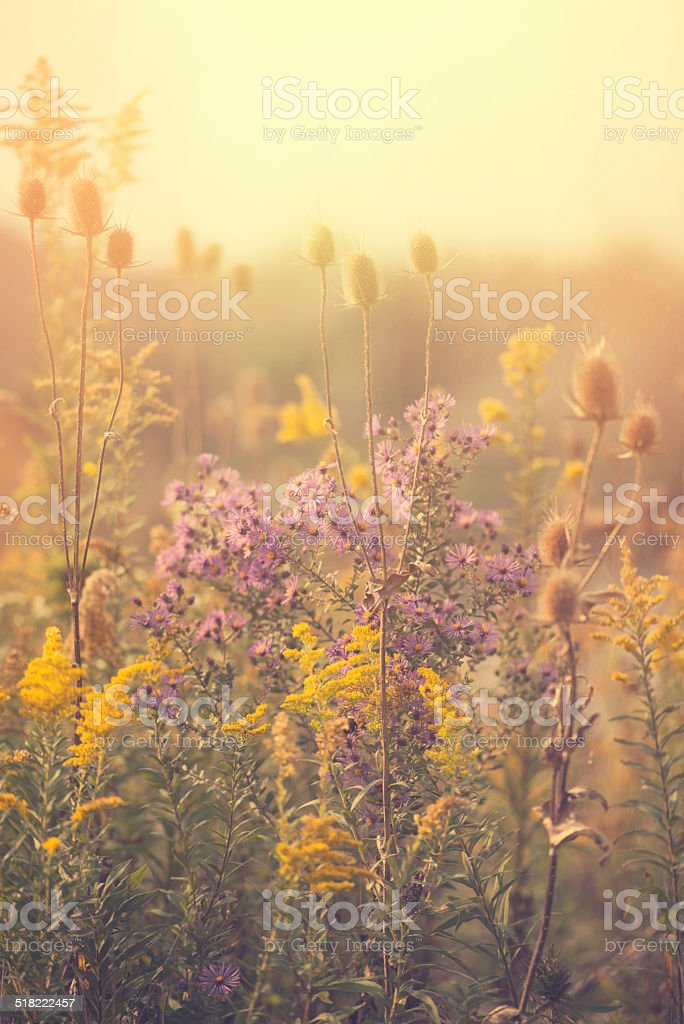 autumn wildflower field stock photo