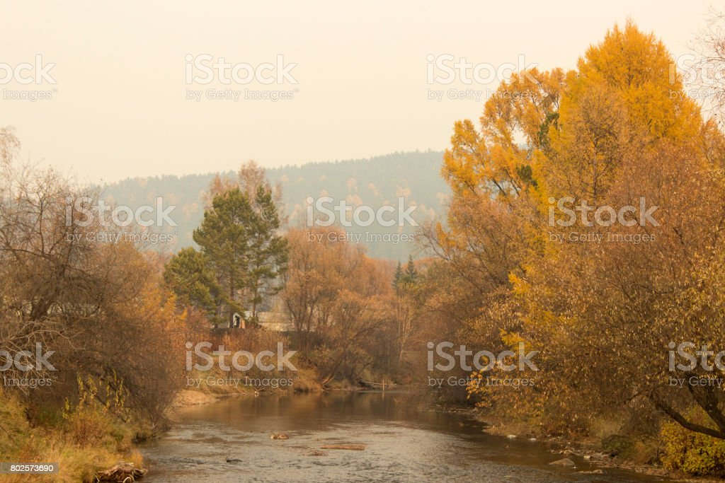Autumn willow by the river. Colorful trees. Siberian forest. stock photo