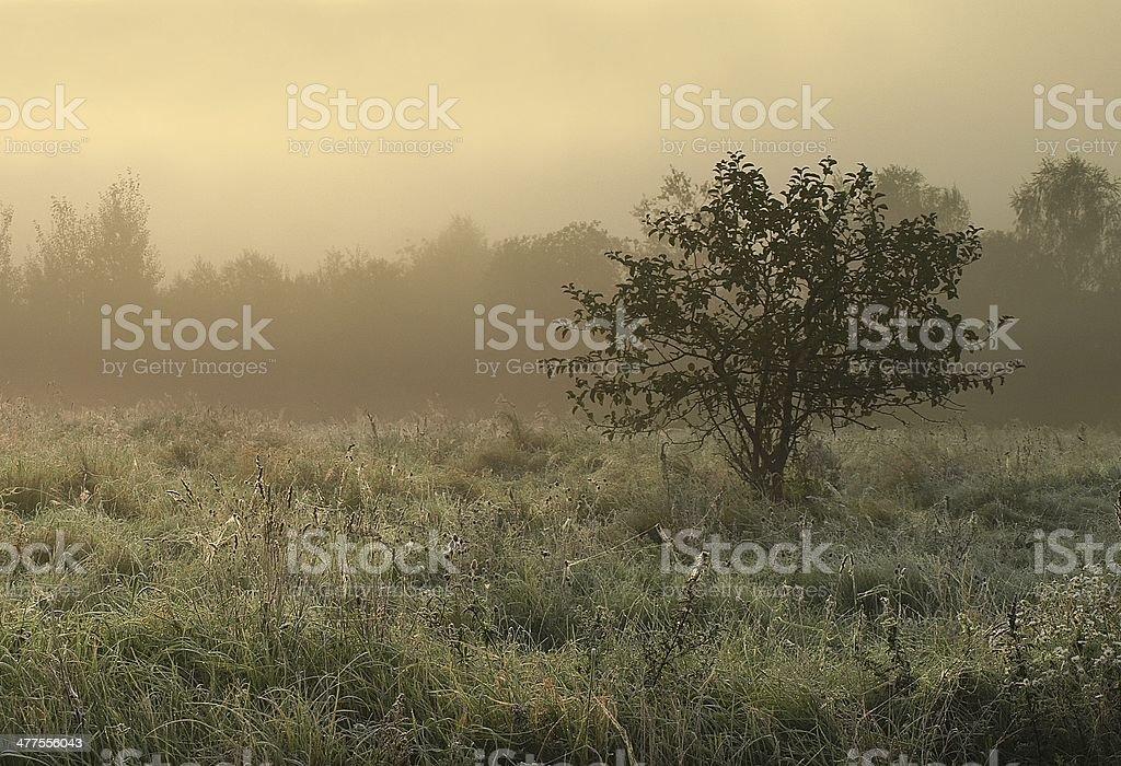 autumn with fog stock photo