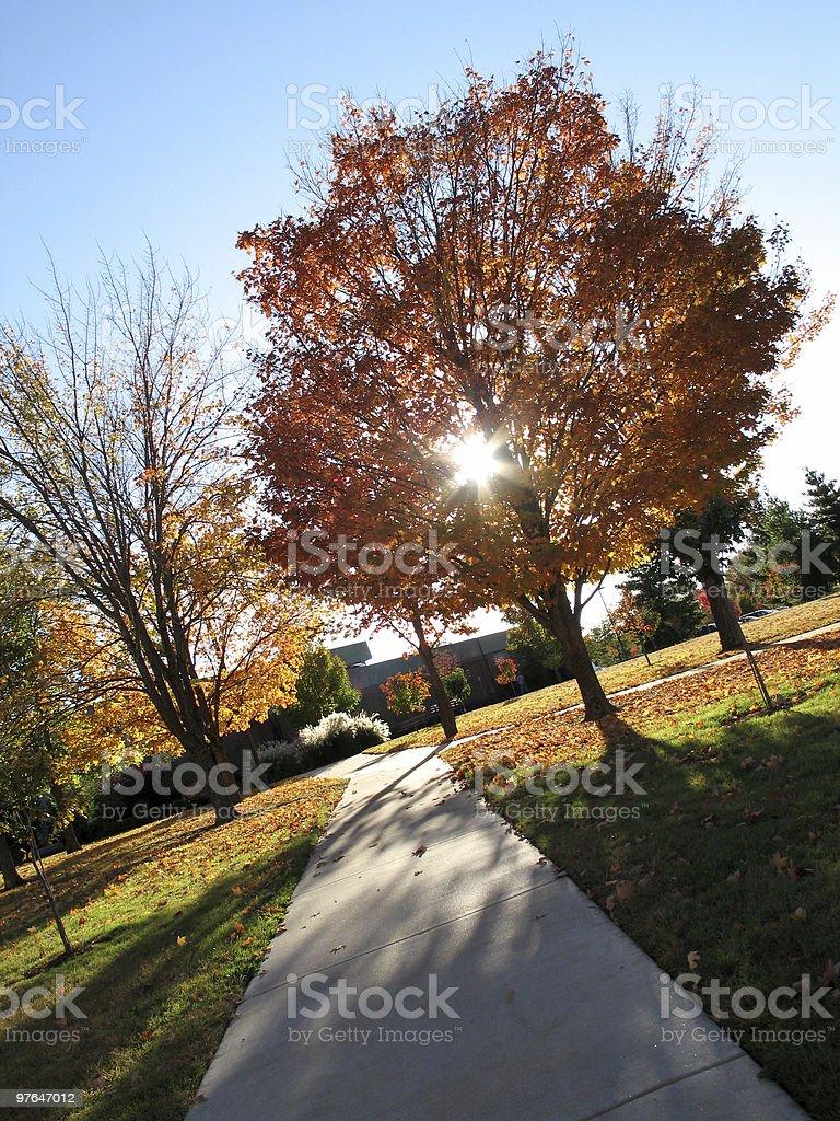Autumn Wonders royalty-free stock photo