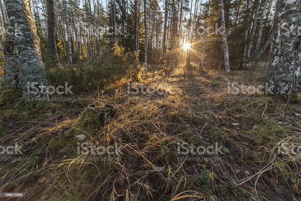 Autumn wood in solar weather royalty-free stock photo