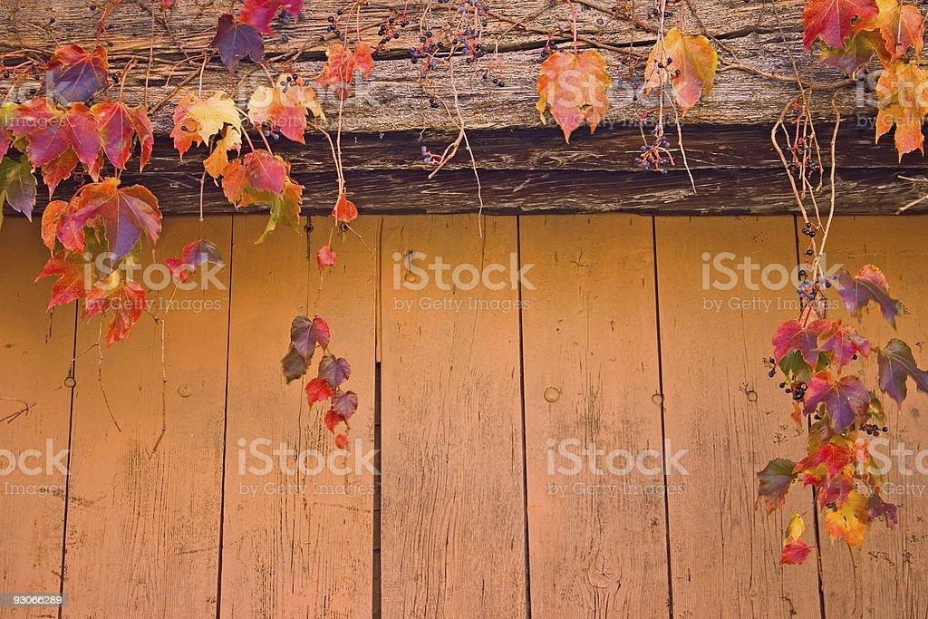 Autumn wood royalty-free stock photo