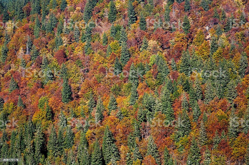 Autumn woodland background stock photo