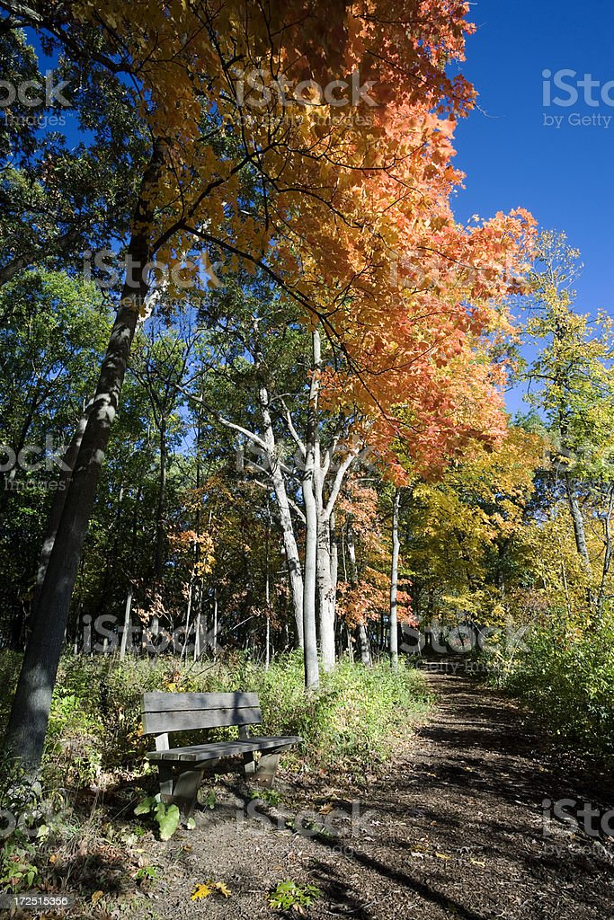 Autumn Woodland Path and Seat stock photo