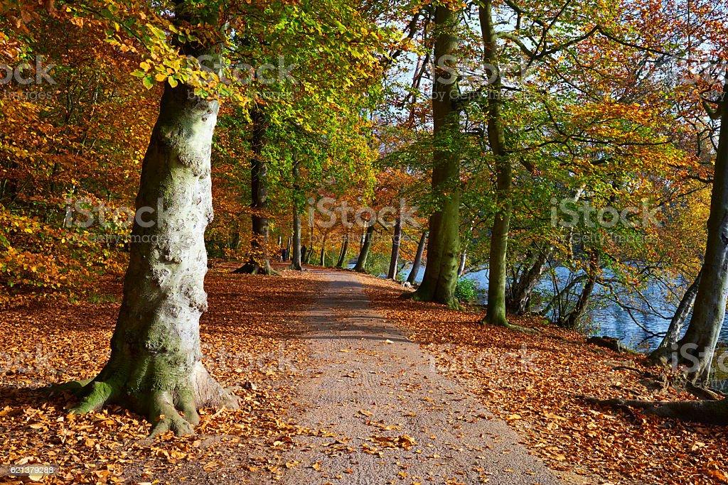 Autumn Woodland Scenic stock photo