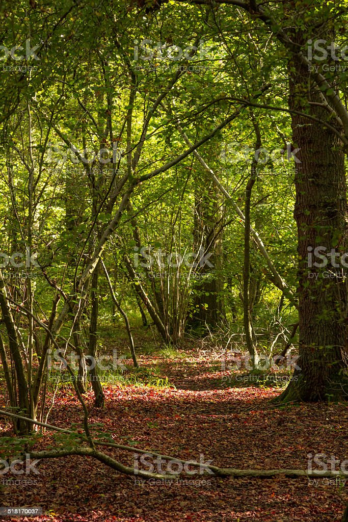 Autumn woodlands stock photo