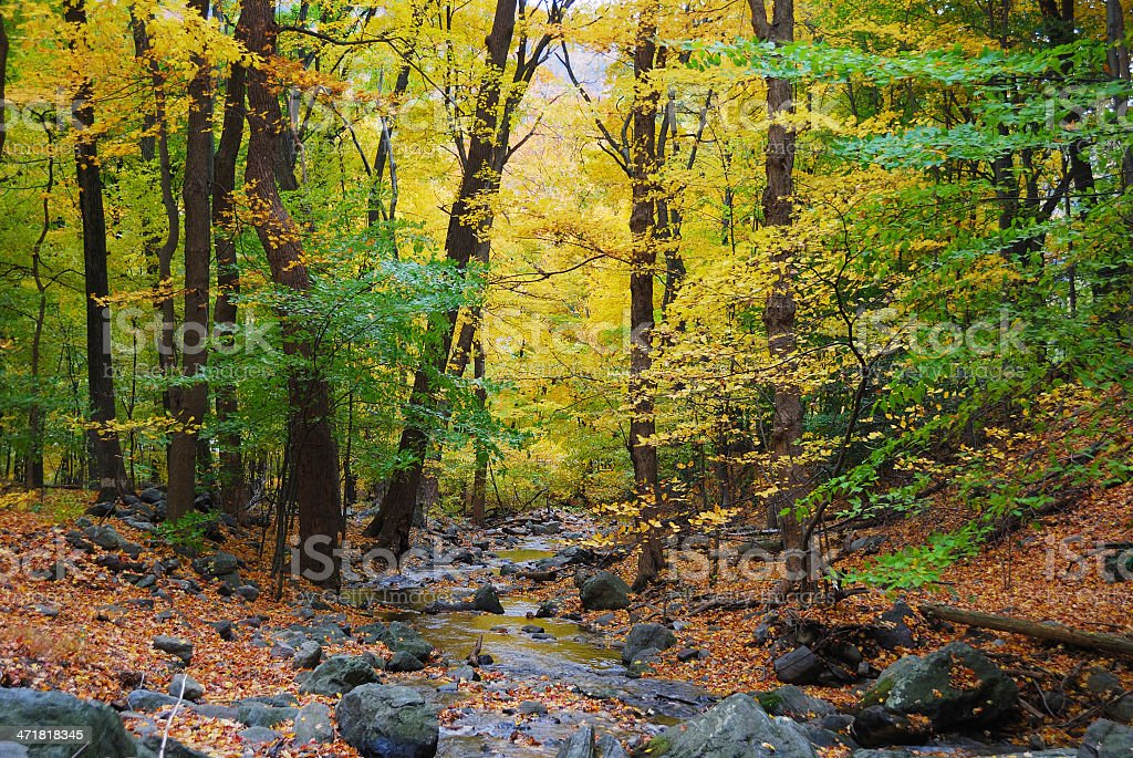 Autumn woods and creek stock photo