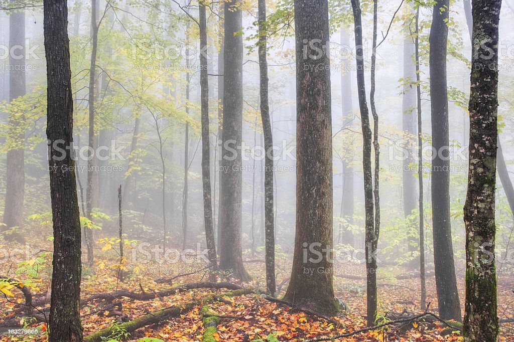 Autumn woods in fog royalty-free stock photo