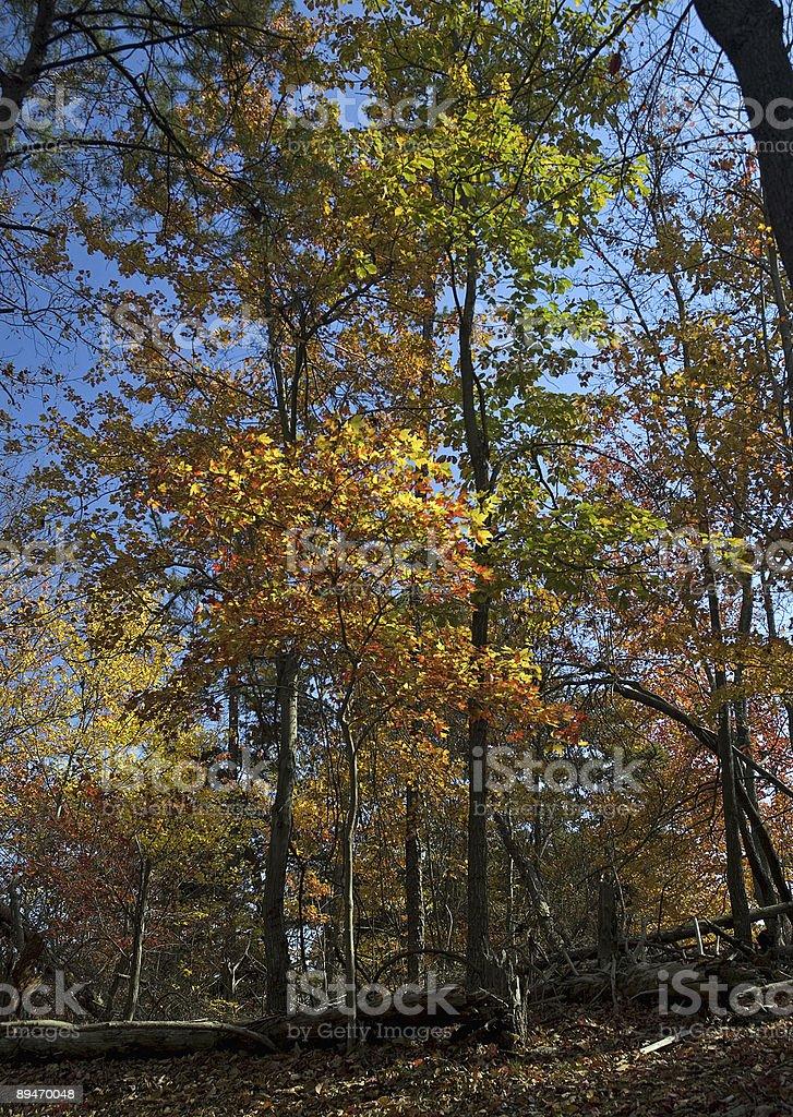 Autumn Woods royalty-free stock photo