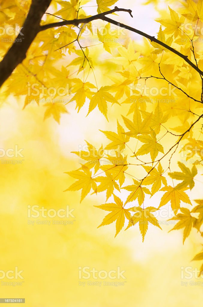 Autumn Yellow Colors royalty-free stock photo