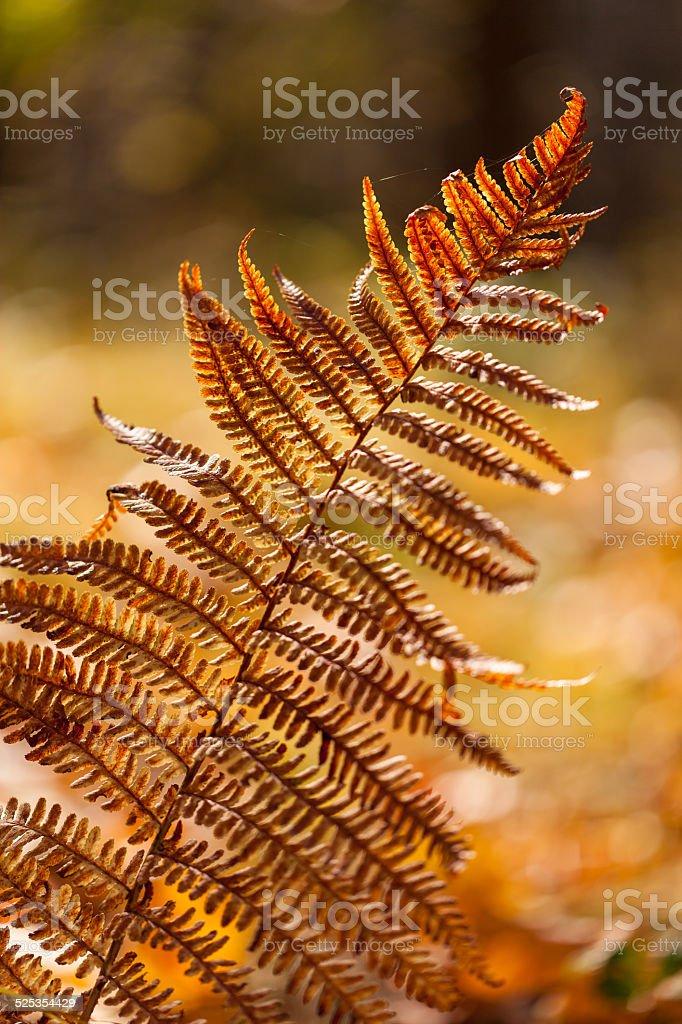 Autumn yellow fern stock photo