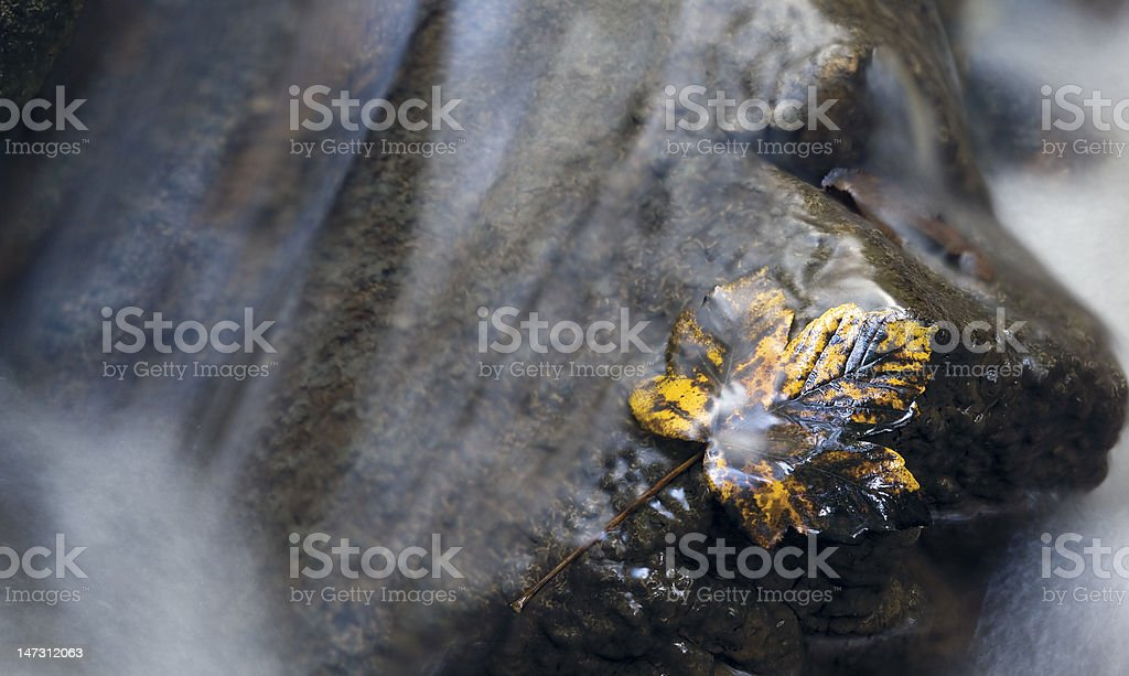 autumn yellow leaf in a brook royalty-free stock photo