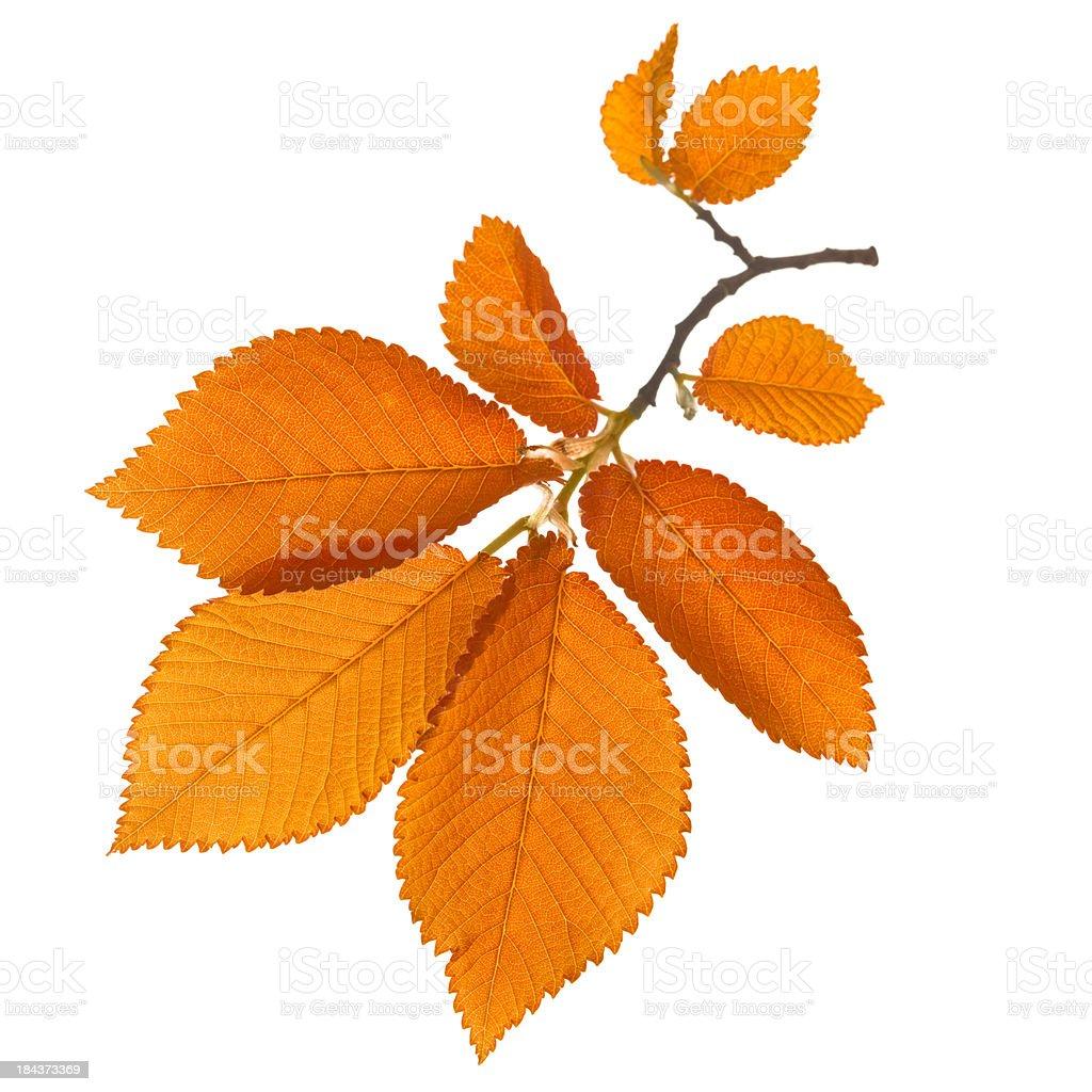 Autumn yellow leaf royalty-free stock photo